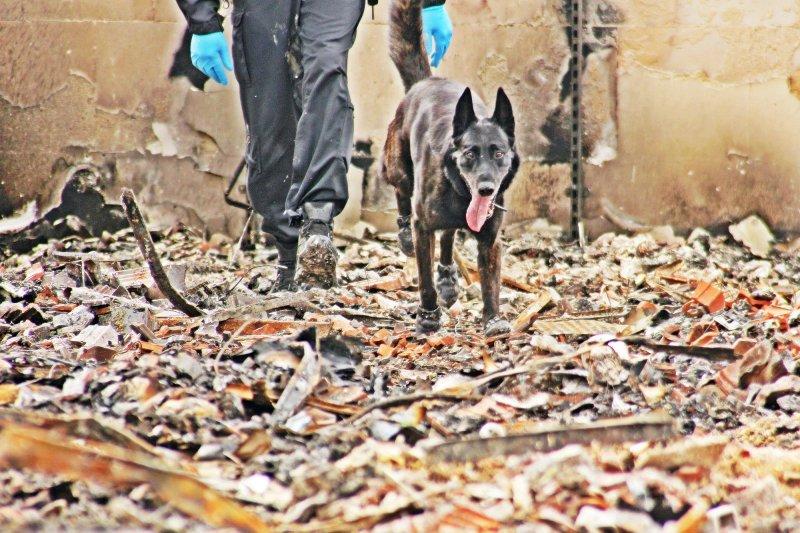 Polizei setzt Spürhunde im abgebrannten Dannenberger Einkaufszentrum ein