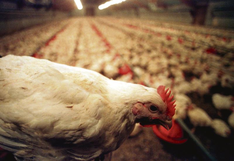 Landwirt plant Bau eines zweiten Hähnchenmaststalls bei Teplingen